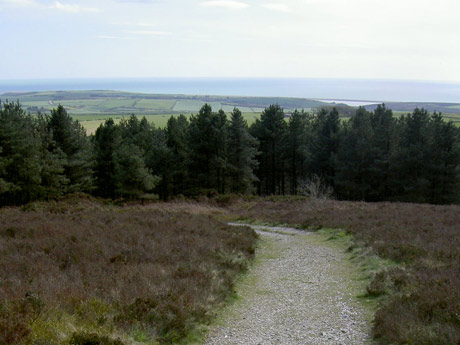 View from Hardy's Monument